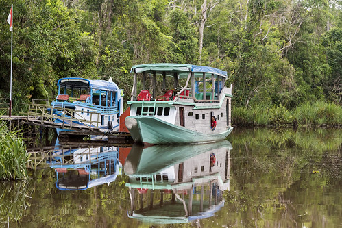 klotok riverboats sightseeing wildlifeviewing orangutansanctuary boatel reflections sekonyerriver tanjungputingnationalpark kalimantanprovince indonesia borneoisland