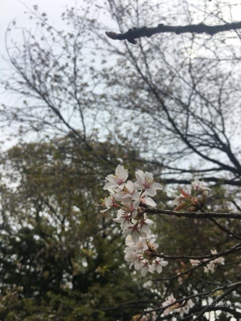 edutokyo_twcu_201704 (14)