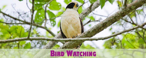 Costa Rica Bird Watching near San Jose and Limon