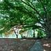 Green-Wood: Summer 2013