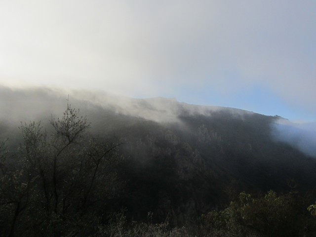fog moves through the canyon
