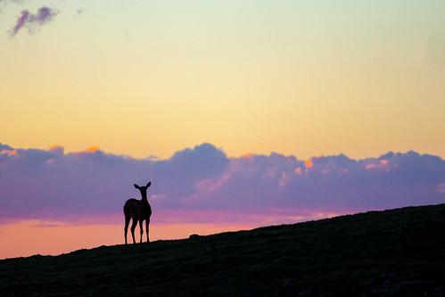 sunset animals events places deer rockymountainnationalpark rockcut rmowpworkshop