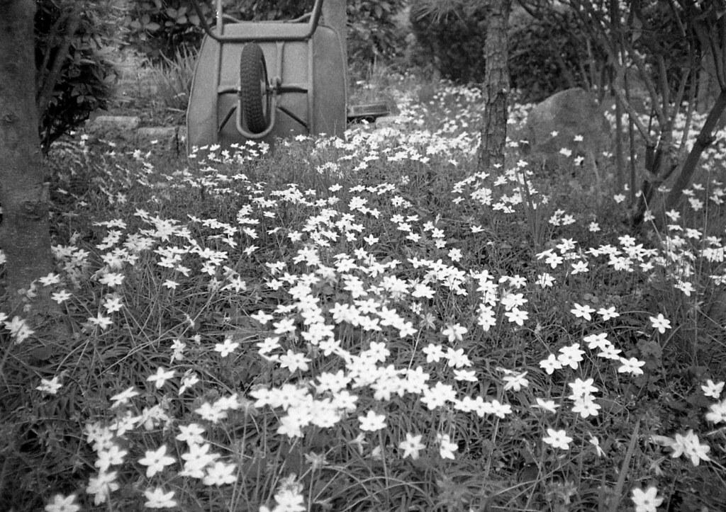 猫車の花畑