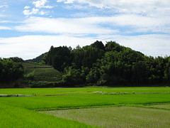 rice, tea and bamboo