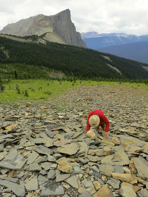Burgess Shale Discovery Site with Mount Burgess
