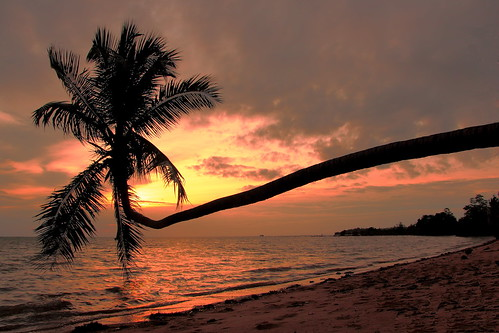 sunset tree island palm ko phangan tailand