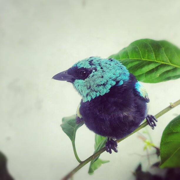birds #birding #igbird #igbirdfreaks #feather_perfection #nature_perfection...