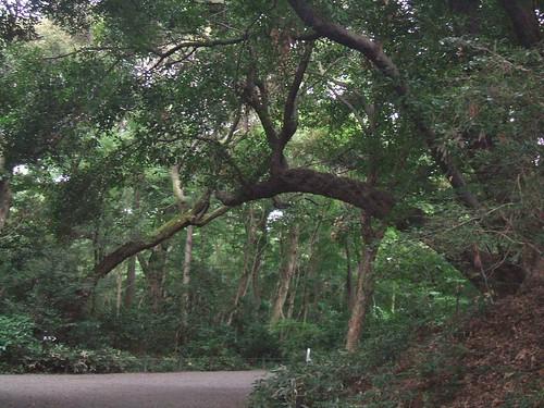 国立科学博物館附属自然教育園 樹木のアーチのよう