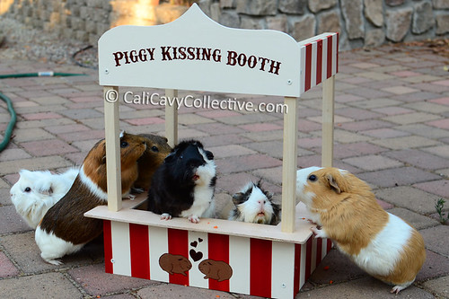 The herd at the piggy kissing booth