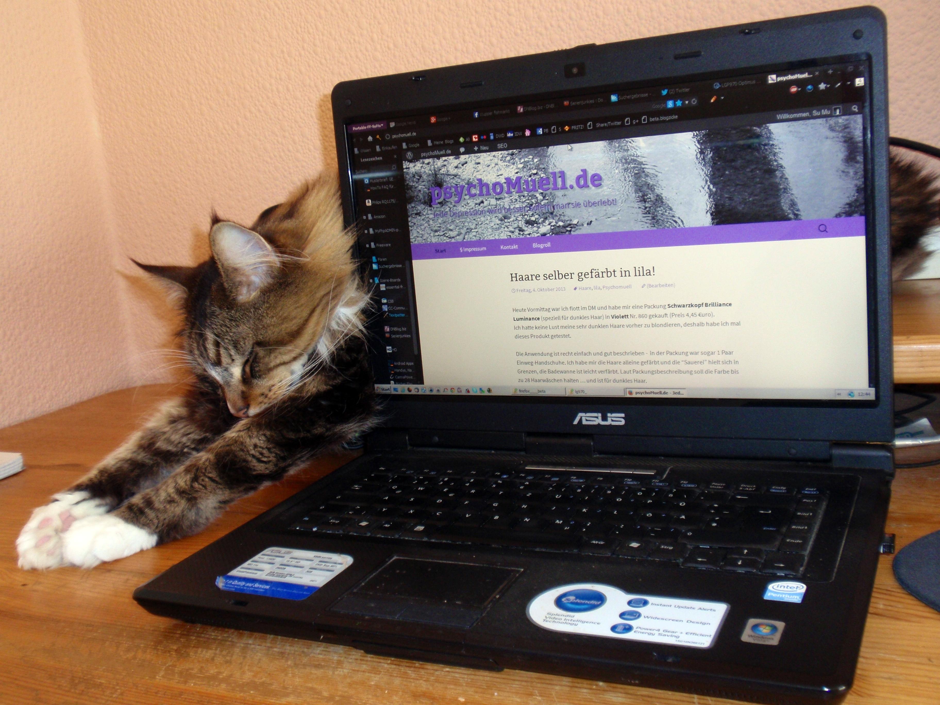 Adonis liegt hinter dem Laptop