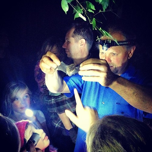 Fauna #nitewalk at #niteworks with the very excellent Garry Daly. Hello little sugar glider. #riversdale #bundanon
