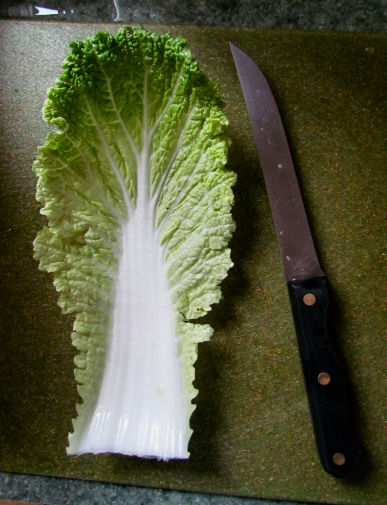 Nappa Cabbage Leaf