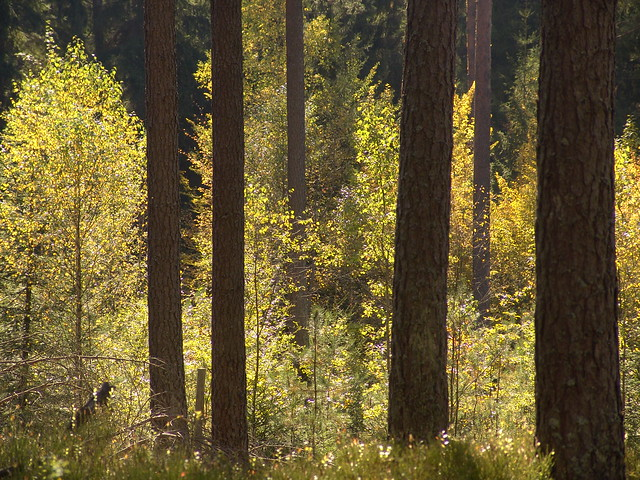 Herbstwald Unterwuchs #holzvonhier
