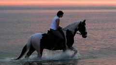 2010 07 02 Paard en Noordzee