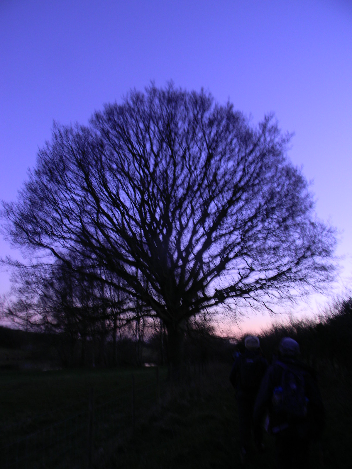 Tree at dusk 1 Appledore Short Circular