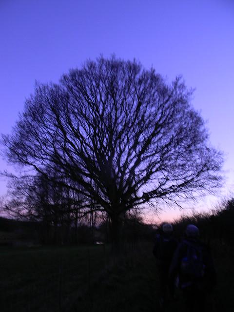 Tree at dusk 1