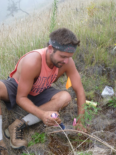 Restoration Assistant Preston Sheaks carefully planting a Māmane.