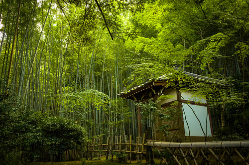 in the bamboo grove (Takiguchi-dera, Kyoto)