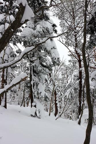 雪こんもり