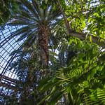 Obrázek Belle Isle Conservatory u Windsor. plants detroit conservatory belleisle albertkahn annascrippswhitcomb annascrippswhitcombconservatory