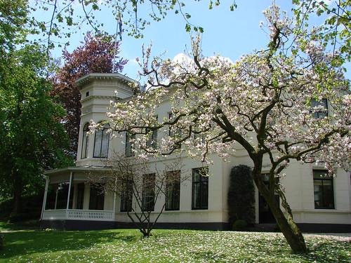 Lievendaal Magnolia