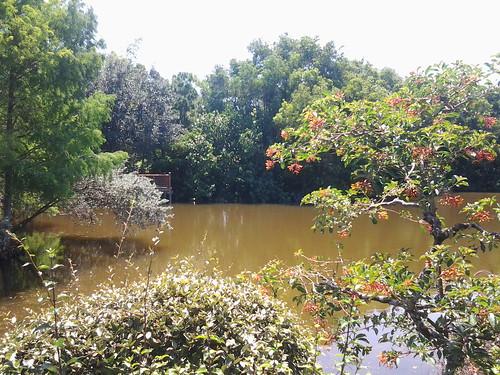 Morikami Japanese Gardens Delray Beach