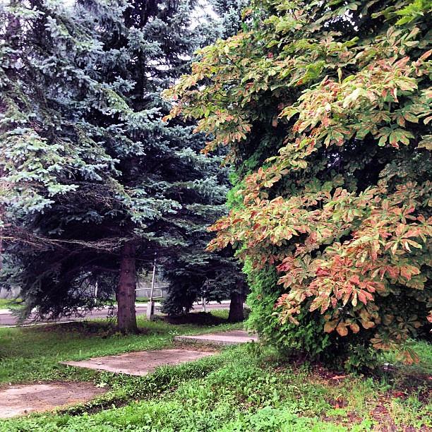 Осень почти #народные промыслы #continuing #гжель