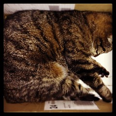 Kitteh in a box #catspam