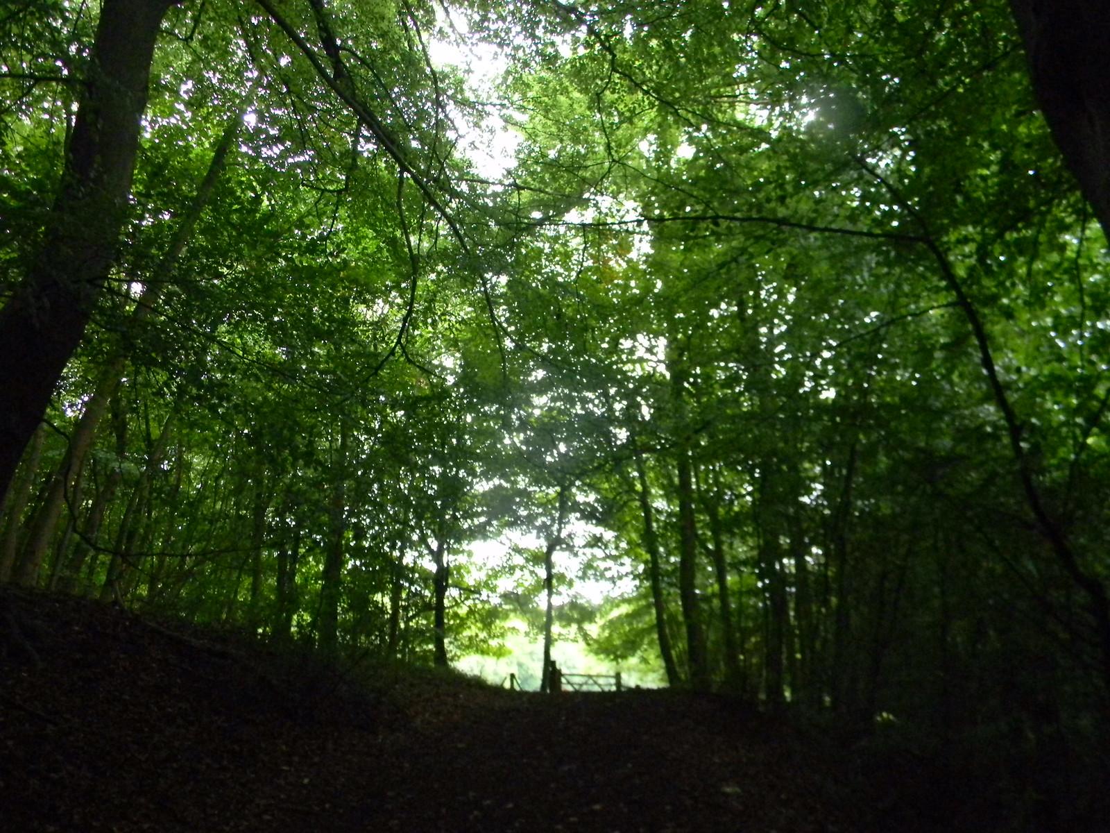 Norbury Park Woods Box Hill Circular