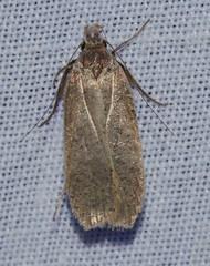 Unidentified Moth 5-6-14