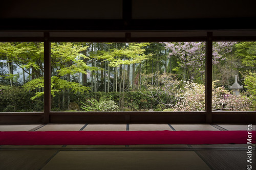 Kyoto, Japan - Framing a Spring Garden at Hosen-in Temple