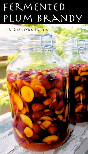 Fermented Plum Brandy Recipe -- Fermented foods taste amazing and are fabulous for your health! Try these great ideas to get your inspired! A great new years resolution!
