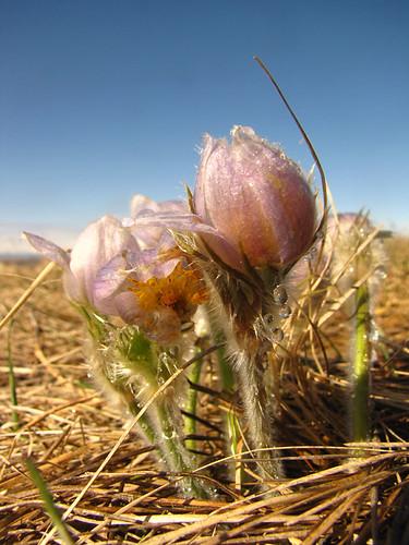 On the prairie #2