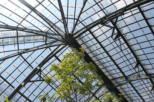Greenhouse ceiling.