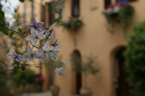 Bevagna: i fiori del paese