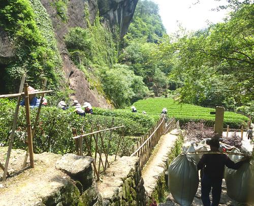 Fujian-Wuyi-Shuillandong-Dahongpao (111)