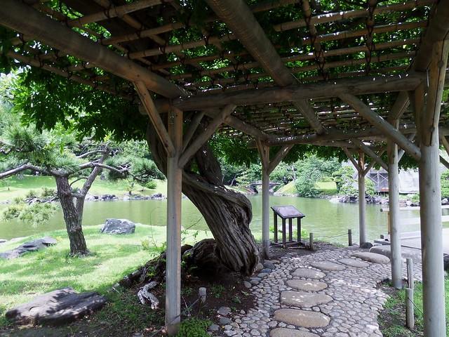 Hama-Rikyu Garden Wisteria Trellis