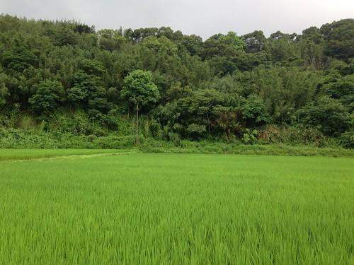 苗栗通宵這塊小小的農地,孕育著以石虎為名的水稻,從架構農田生態系開始,修復人與自然的關係。