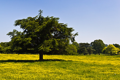 park uk shadow england field yellow landscape spring sunny devon cedar buttercups
