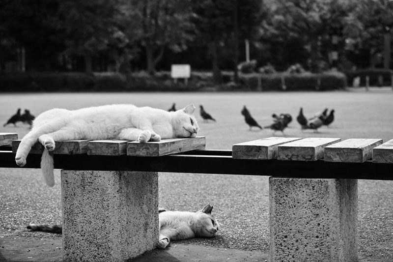 Cat Memories 2014/05/28