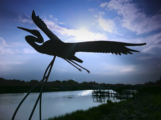 Honorable Mention - 'Flight of Life' - Tom Hanson