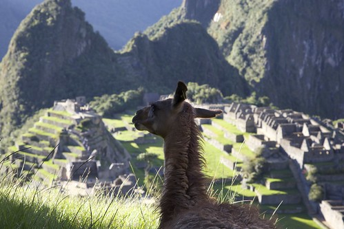 sunset sun peru machu picchu inca canon relax mammal ruins view mark cusco iii llama photoaday 5d rest 365 photoclub 365day zphotoaday