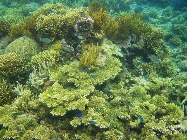 coralgarden3