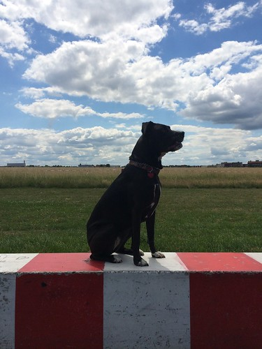 European Instagram meet up #EverchangingBerlin _Tempelhofer Feld airport boxador dog on barrier