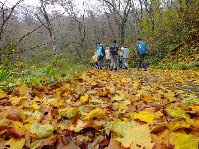 雪霊水付近を歩く.中腹と比べて黄色の葉が目立つ.