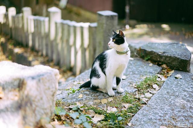 尾道 貓之細道