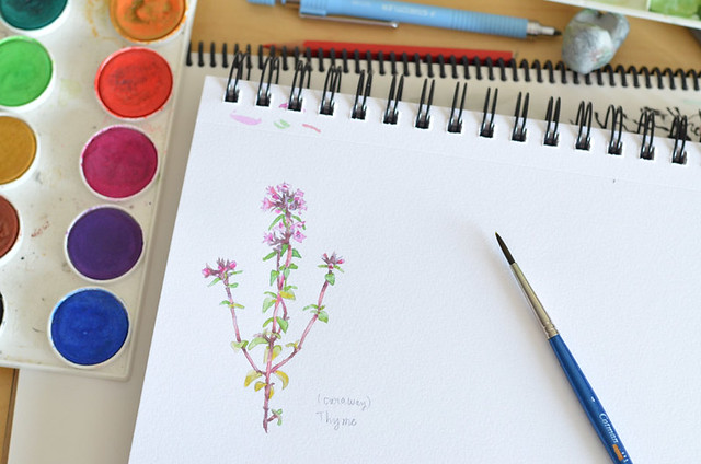 watercolor herb illustrations