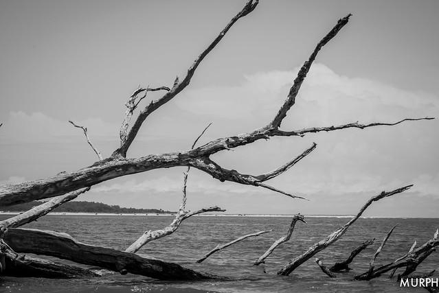 Big Talbot Island
