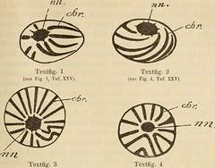"""Image from page 380 of """"Zeitschrift für wissenschaftliche Zoologie"""" (1848)"""
