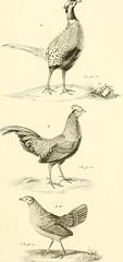 """Image from page 206 of """"Iconographie du règne animal de G. Cuvier, ou, Représentation d'après nature de l'une des espèces les plus et souvent non encore figurées de chaque genre d'animaux : avec un texte descriptif mis au courant de la science : ouvrage p"""